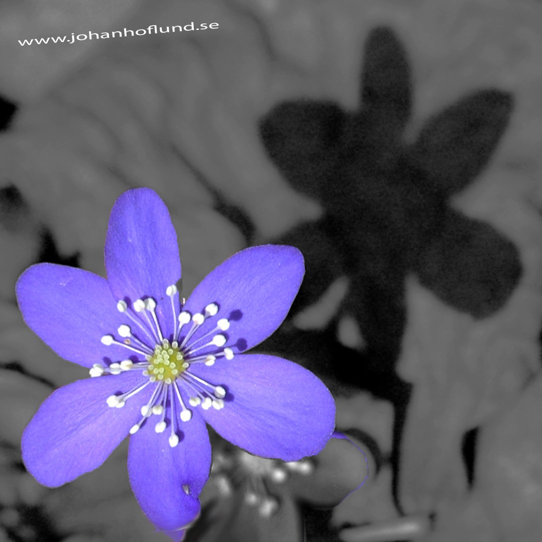 Blue flower with a shadow